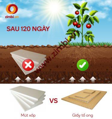 Mút xốp và giấy tổ ong gói hàng sau 120 ngày thải ra môi trường